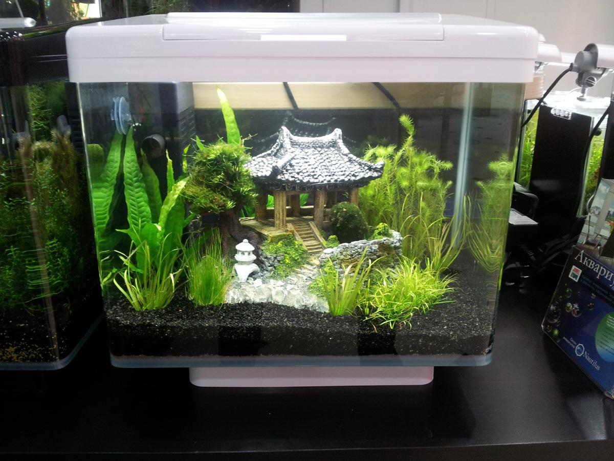 Дизайн аквариума на 30 литров