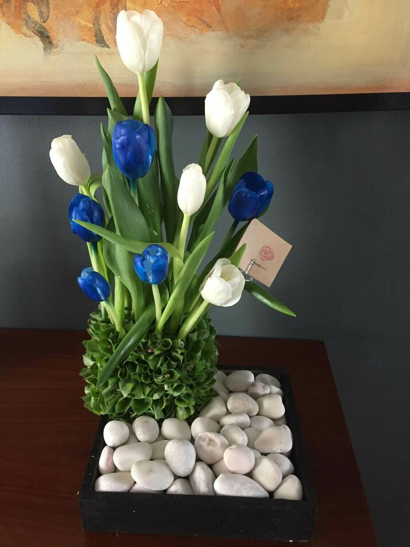 Poseidón - Tulipanes blancos y azules