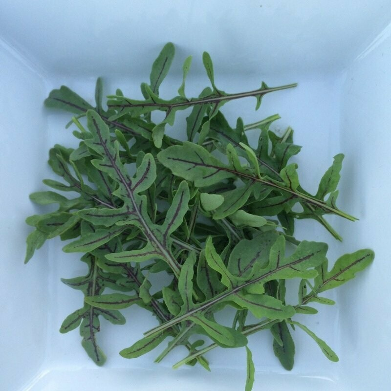Red Dragon Rucola - 1lb - $7