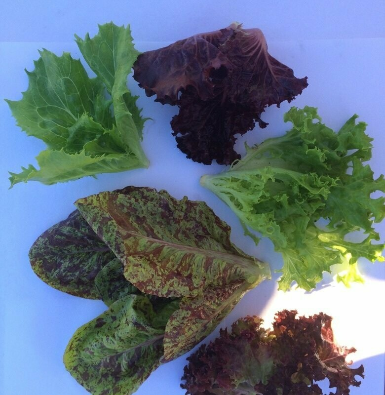 Super Baby Lettuce Mix - 2lbs - $18