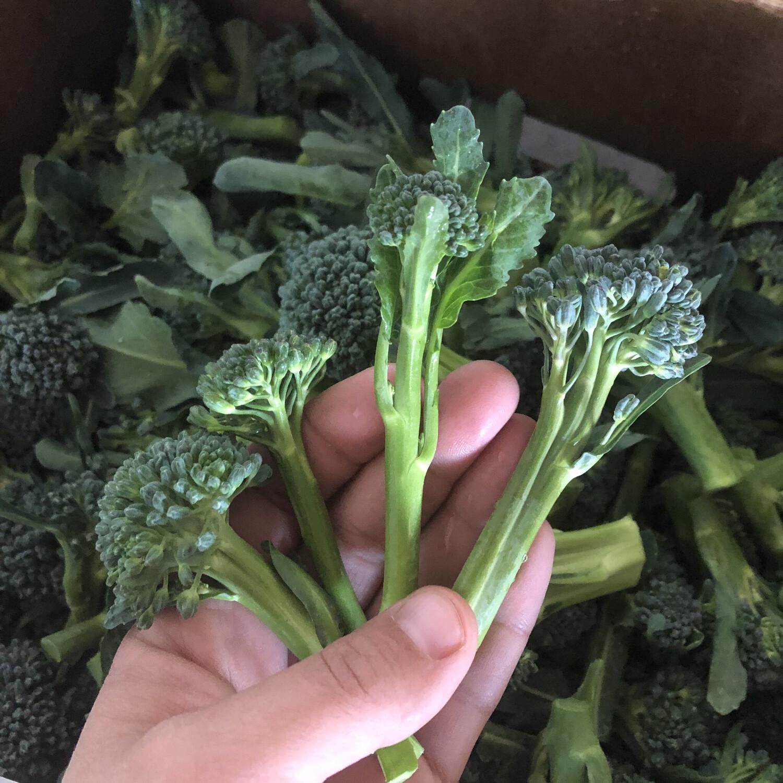 Broccoli di Ciccio - 1lb - $6
