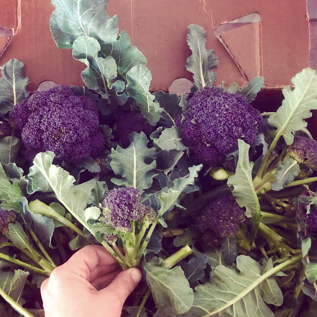 Purple Sprouting Broccoli - 5lbs - $20