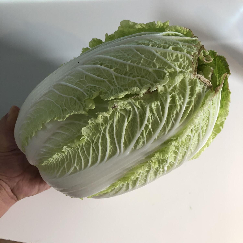Green Napa Cabbage - 1lb - $1