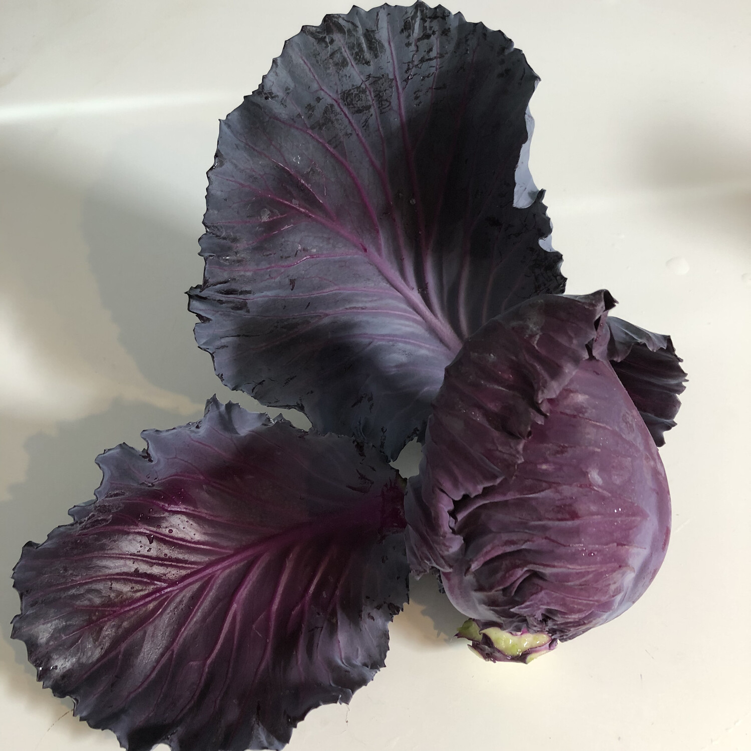 Red Cabbage - 1lb - $2