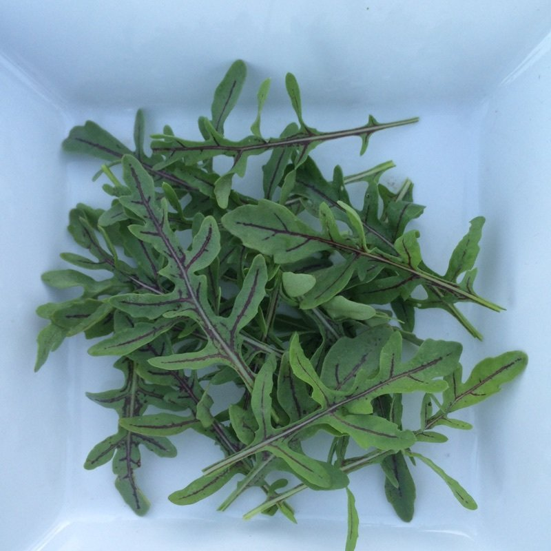 Red Dragon Rucola - 3lbs - $15