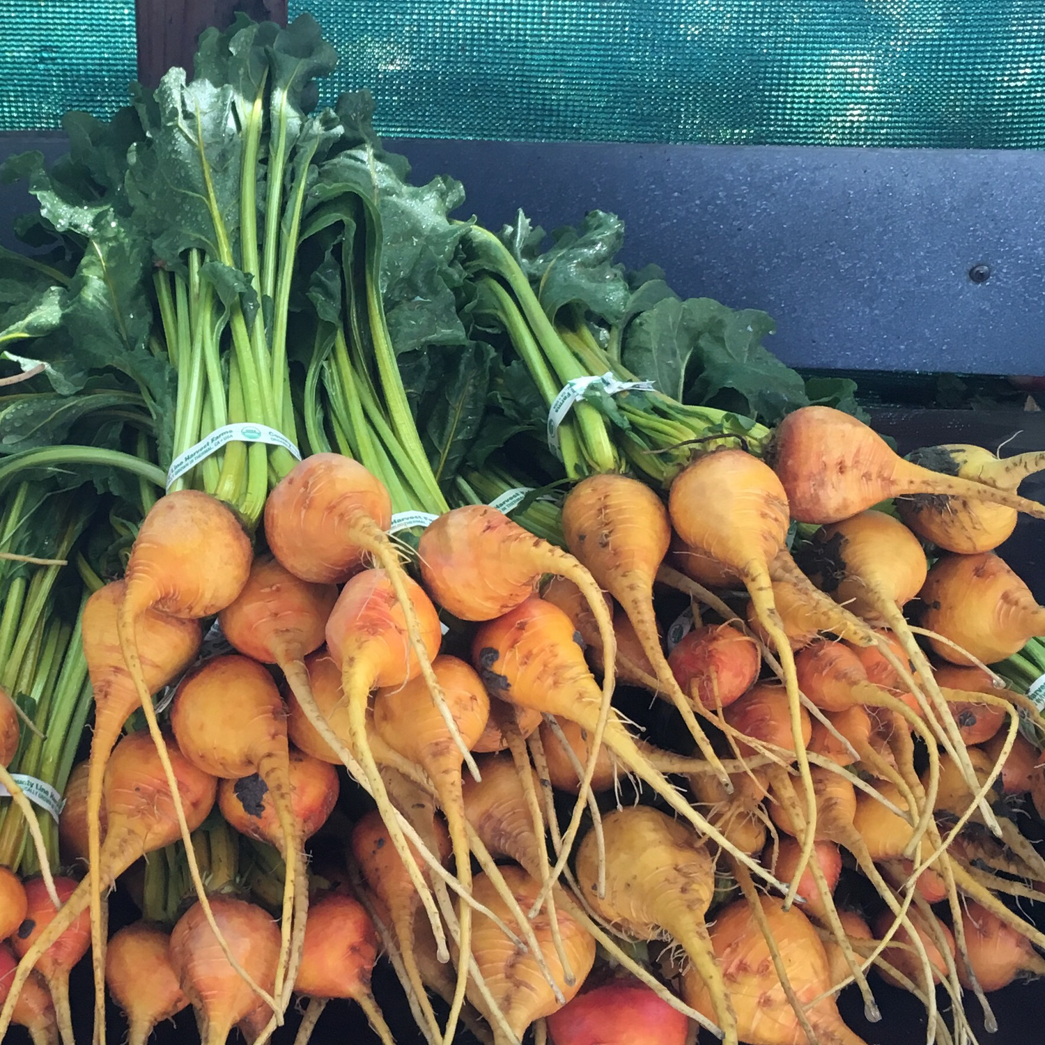 Baby Gold Beets - 24ct - $26
