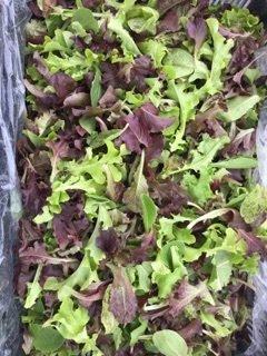 Italian Salad Mix - 3lbs