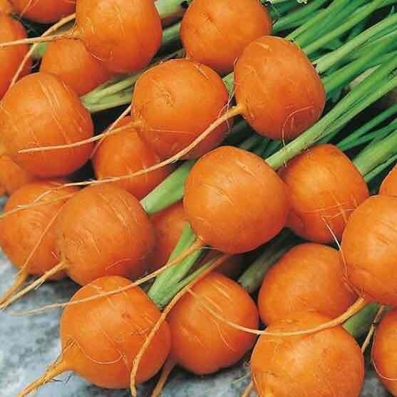 Thumbelina Carrots - 1bu - $2