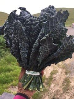 Lacinato Kale-12ct