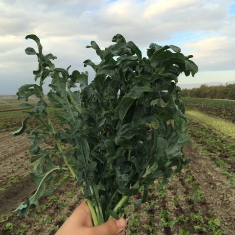 Spigariello Kale-12ct - $14