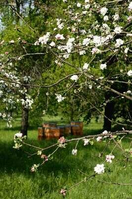 Frühlingsangebot (versandkostenfrei!)
