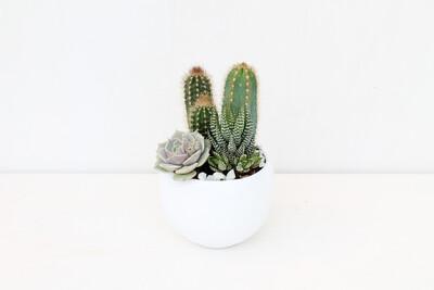 Composizione di Piante Grasse in Bolla Ceramica Bianca