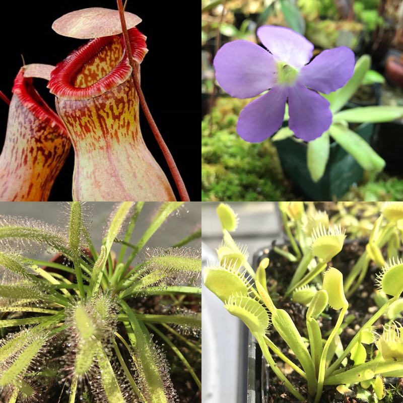 Basic Beginners Carnivorous Plant Starter Kit 5.1