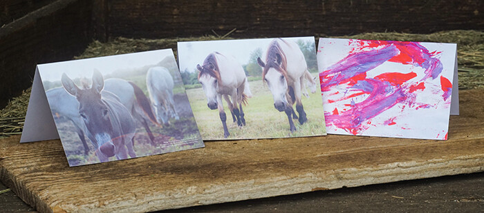 Note Cards, blank inside, featuring images of the I AM HERD Mustangs (3 in a set)