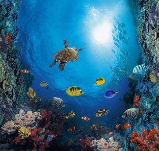Краски моря-1. Фотообои. Размер: 194х204 см.