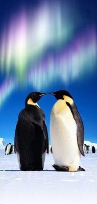 Пингвины. Обои дверные. Размер: 97х204 см