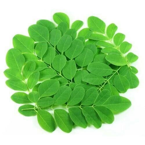 1 bag fresh Moringa (o)