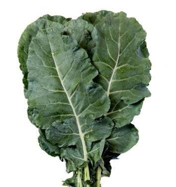 Broccoli leaves - Hojas de Brocoli - Folhas de Brocoli - Feuilles de brocoli