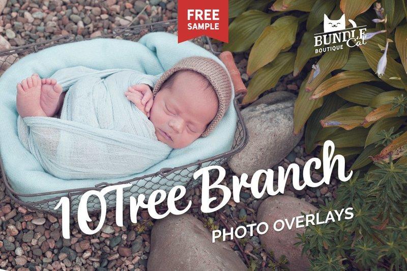 10 Green Tree Branch Photo Overlays