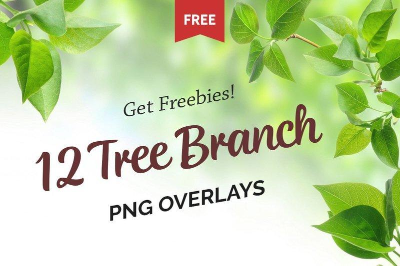 Free Green Tree Branch Photo Overlays