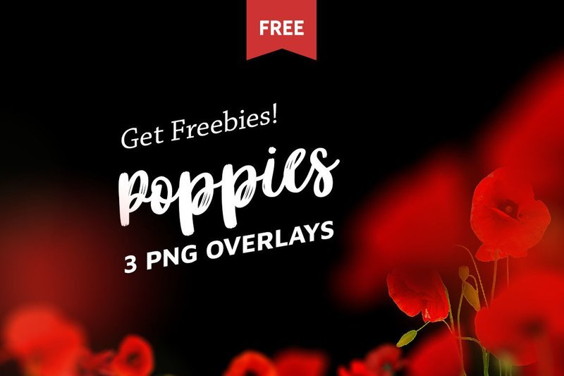 Free Poppie Flowers Photo Overlays