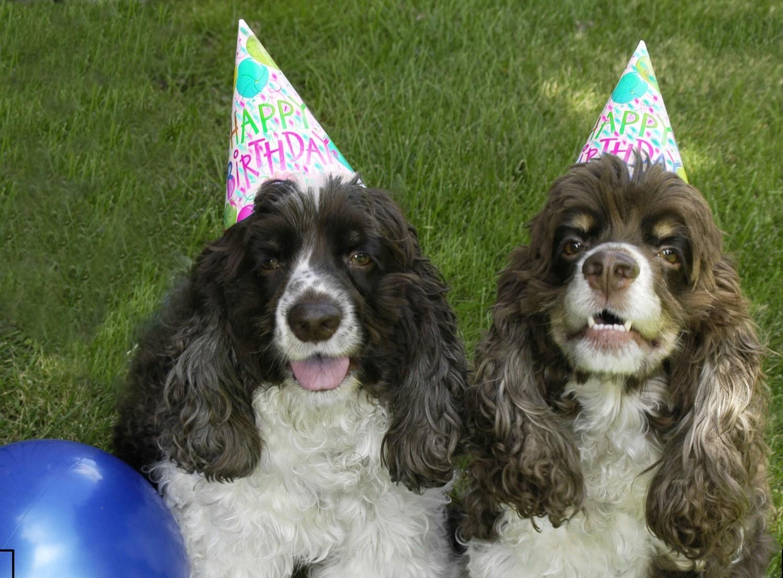 Birthday Dogs