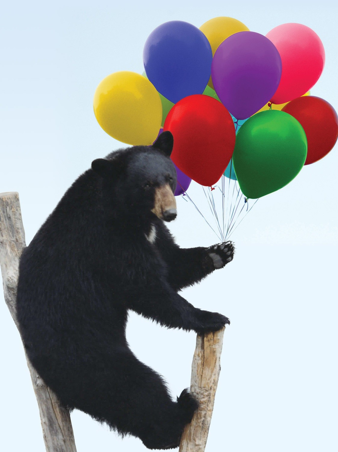 Bear with balloons