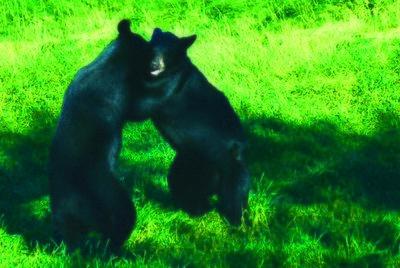 Bear Hug2