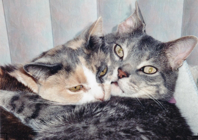 Cute Cats #2
