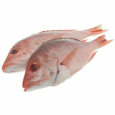 * Red Snapper 1 1/2 To 2 Lb Pcs 10 Pound Box