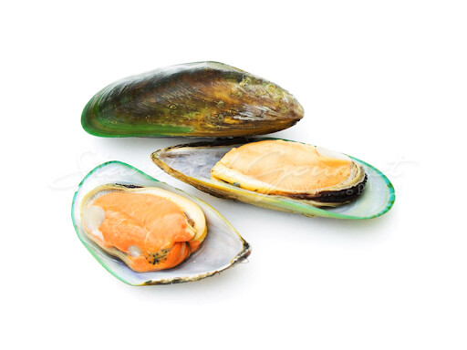 * 1-2 Mussel Shell 2 Pounds