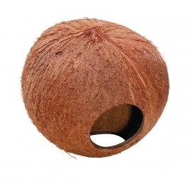 COCONUT GLOBEHOUSE