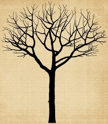 TR024 Tree with no leaves
