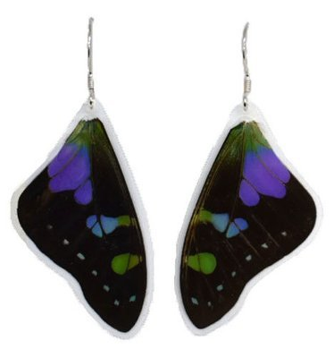 Authentic Butterfly Wing Earrings Laminated
