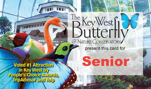 Admission - Senior (65+)