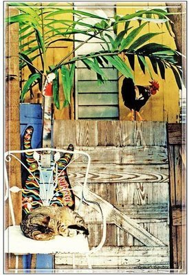 ROOSTER AND CAT * 7'' x 11''