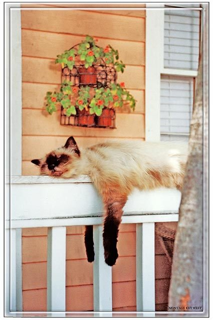 CAT ON RAIL SLEEPING * 6'' x 11'' 10526