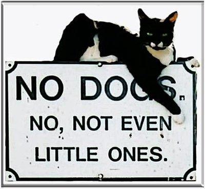 NO DOGS * 8'' x 8''