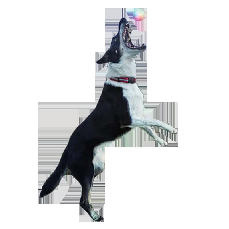 LED Dog Ball by NiteIze