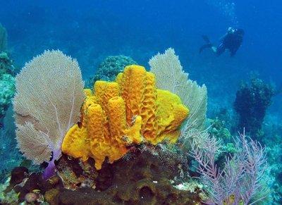 Adopt A Sponge