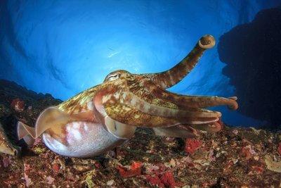 Adopt A Squid