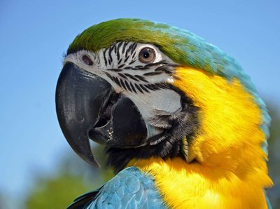 Adopt A Macaw