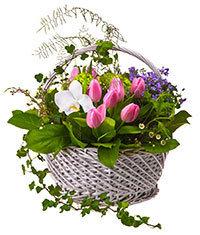 Sincerity Basket