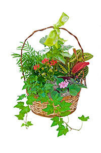 Thoughtful Basket