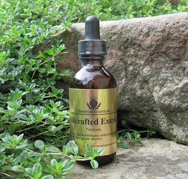 Chaga Mushroom Tincture Dual Extraction