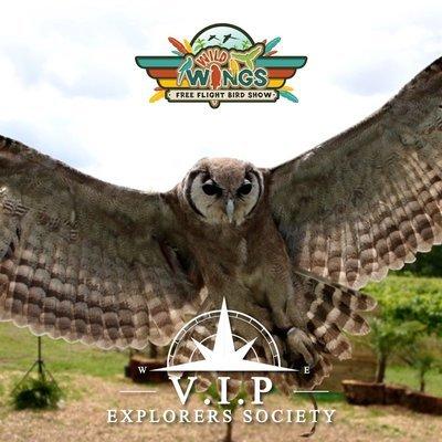 Birds of Prey ( 1 Hour ) V.I.P Session