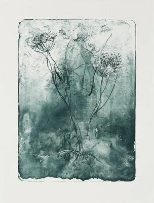 Hemlock (Seed) - Lithograph