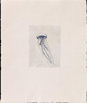 Totem Jellyfish (I) - Etching