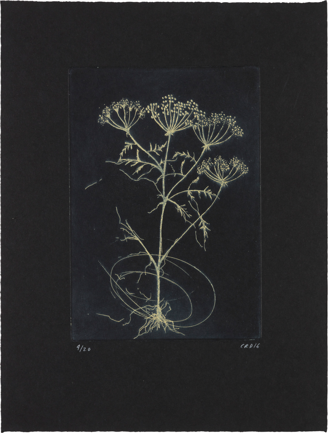 Hemlock (Yellow) - Etching