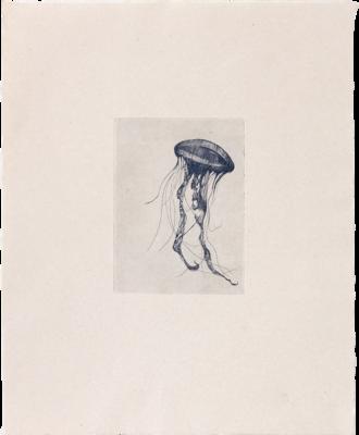 Totem Jellyfish (II) - Etching